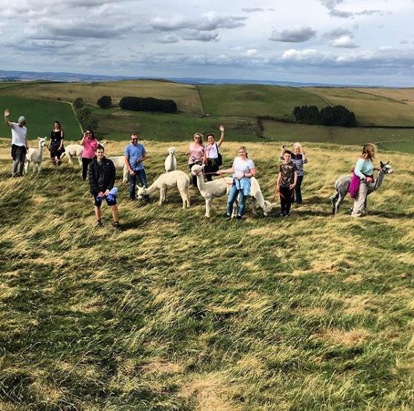 Group of people and alpacas on a trek in the Scottish Borders.