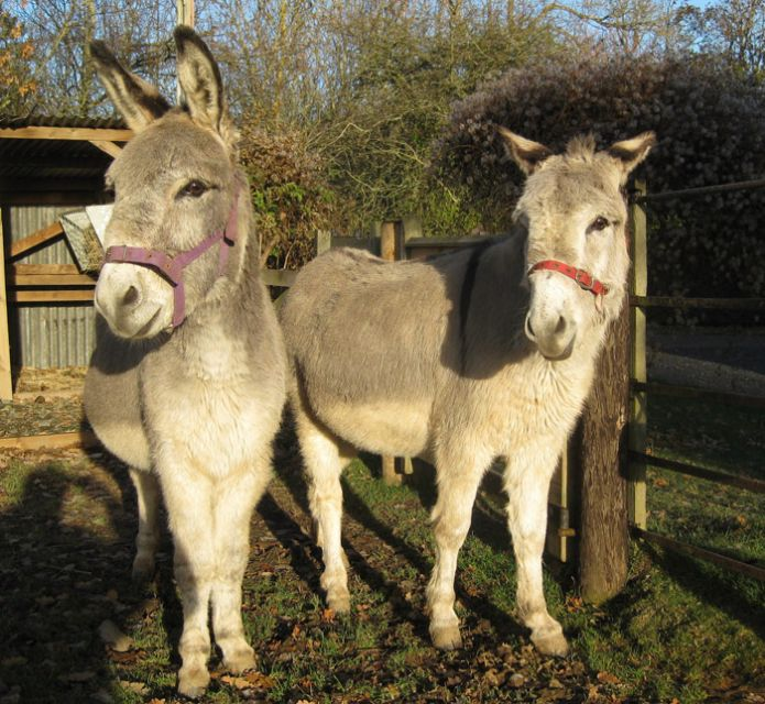 Two donkeys at the Scottish Borders sanctuary.