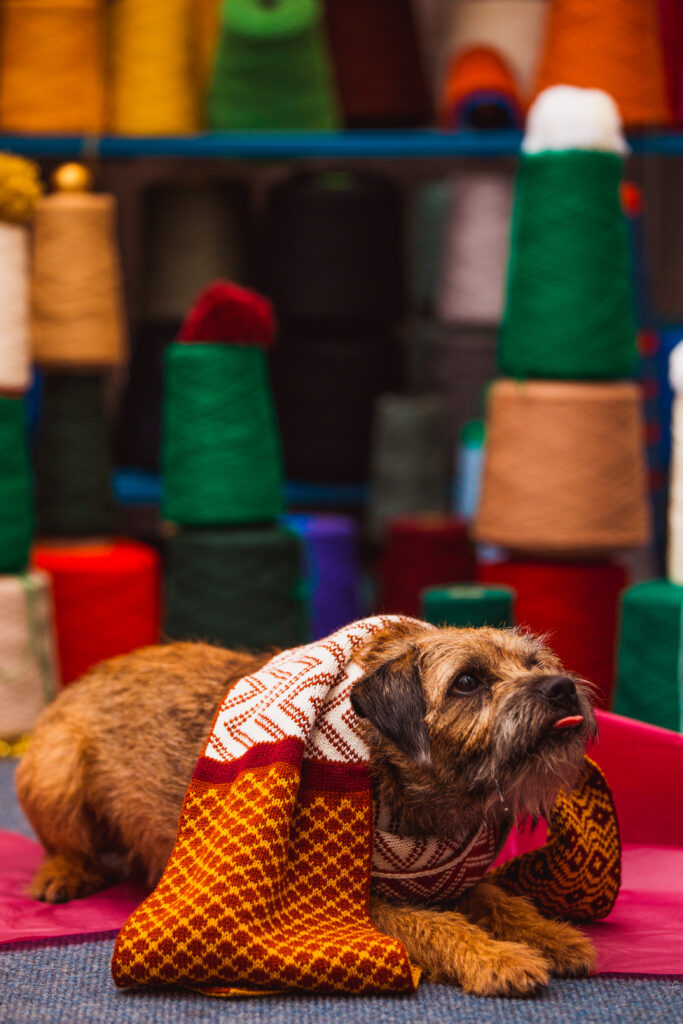 Ruaridh the Border Terrier wearing a Wonky Woolies scarf while sticking his tongue out.